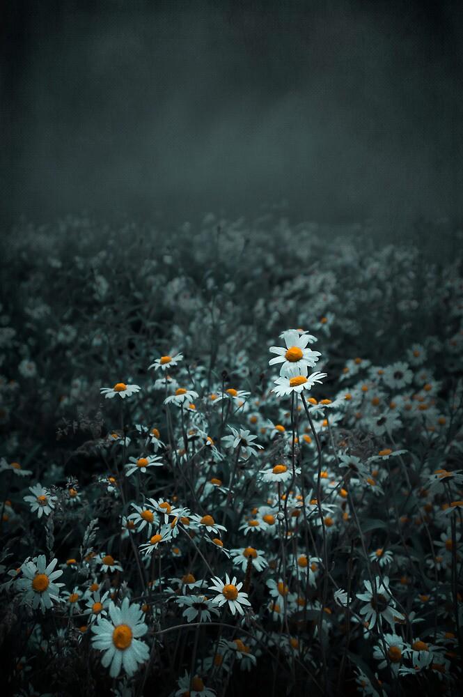 Daisies-Dasies by Svetlana Sewell