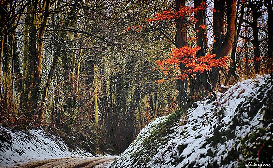 Winter Warmth by naturelover