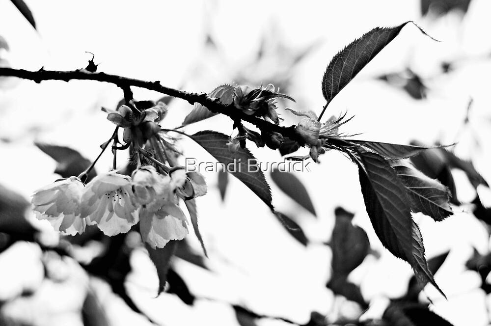 springs white bloom~ by Brandi Burdick
