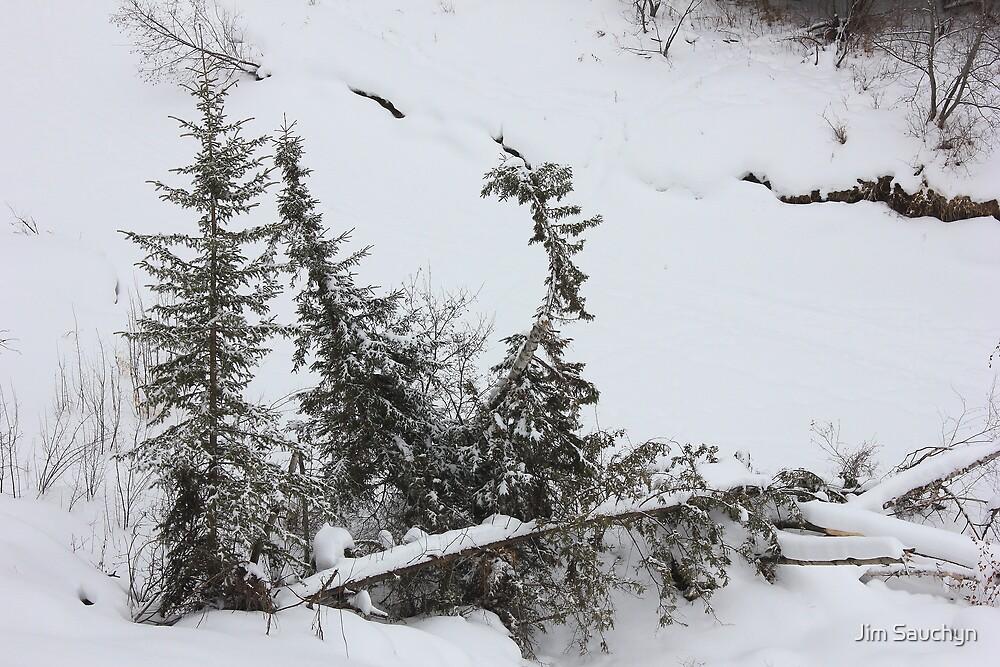 Winter Solitude by Jim Sauchyn