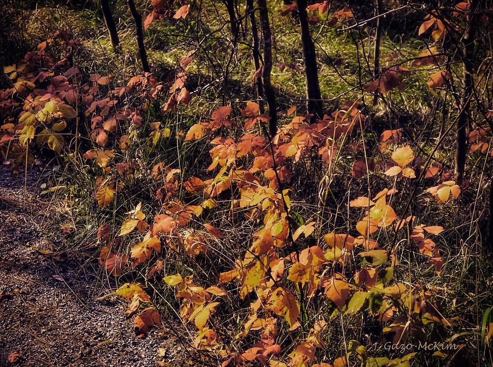 Fall's Last Hurrah by Jo-Anne Gazo-McKim