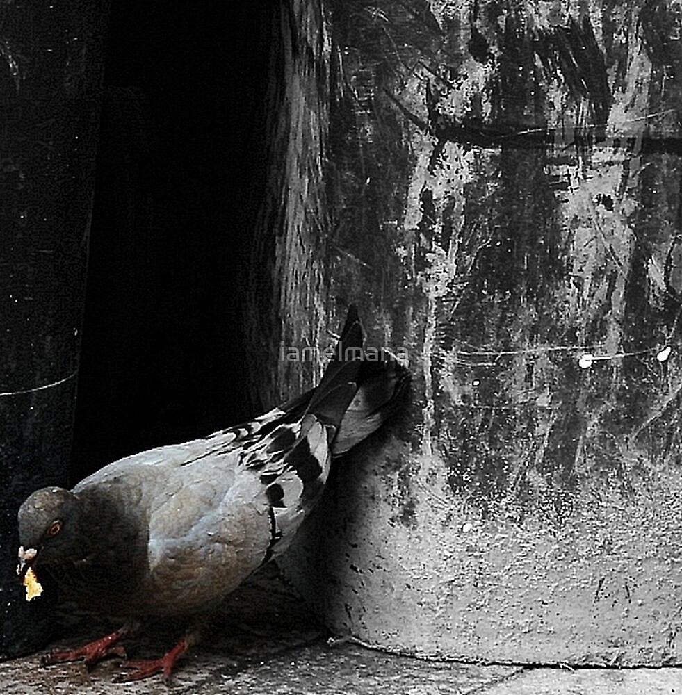 Pigeon in the city by iamelmana