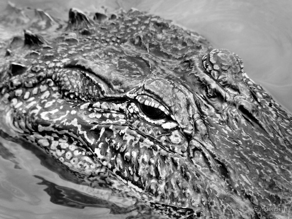 Later Gator by SuddenJim