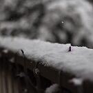 Balcony Snow by Sharlene Rens