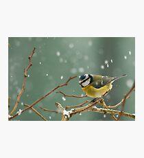 snowstorm survivor Photographic Print