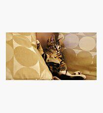 I Got Cat Class & I Got Cat Style Photographic Print