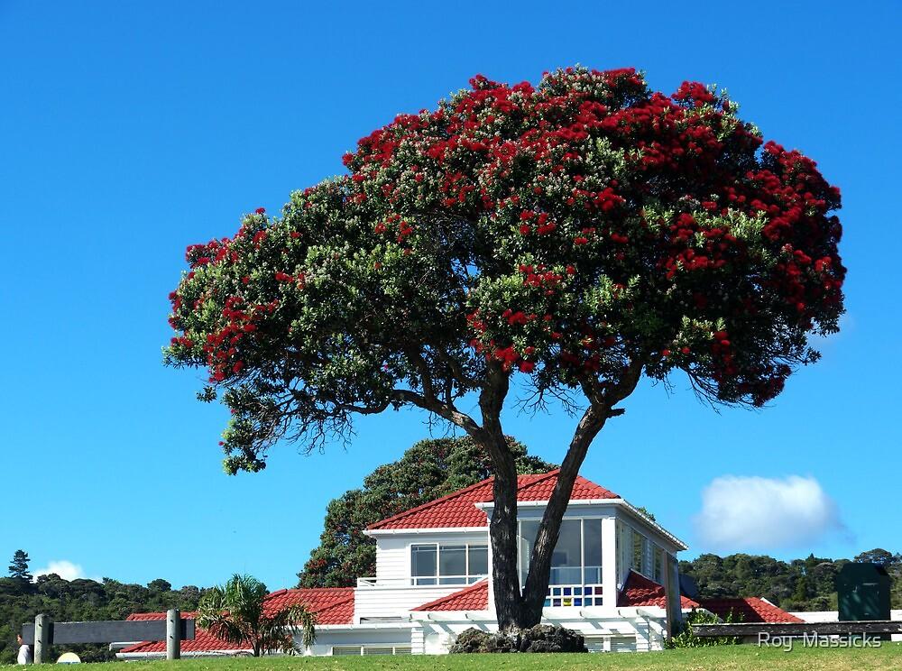 Pohutukawa in full bloom,  Paiha..........! by Roy  Massicks
