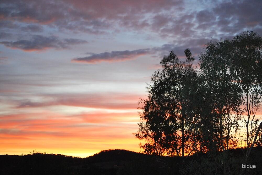 Tree sunset by bidya