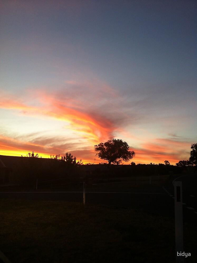 Sunset Lone Tree by bidya