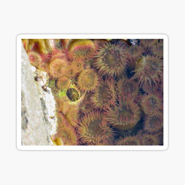 Anemone  Sticker