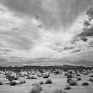 Mojave National Preserve by Mike Herdering
