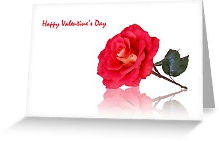 Valentine's Rose by Mariola Szeliga