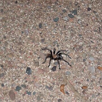 Roosevelt Lake, Arizona Spider Tarantula by ToGalaxy