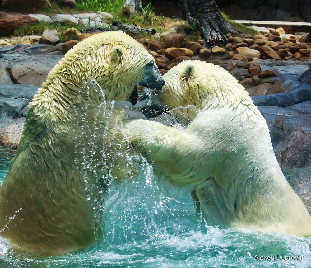 Polar bear play - smash! by Alexey Dubrovin