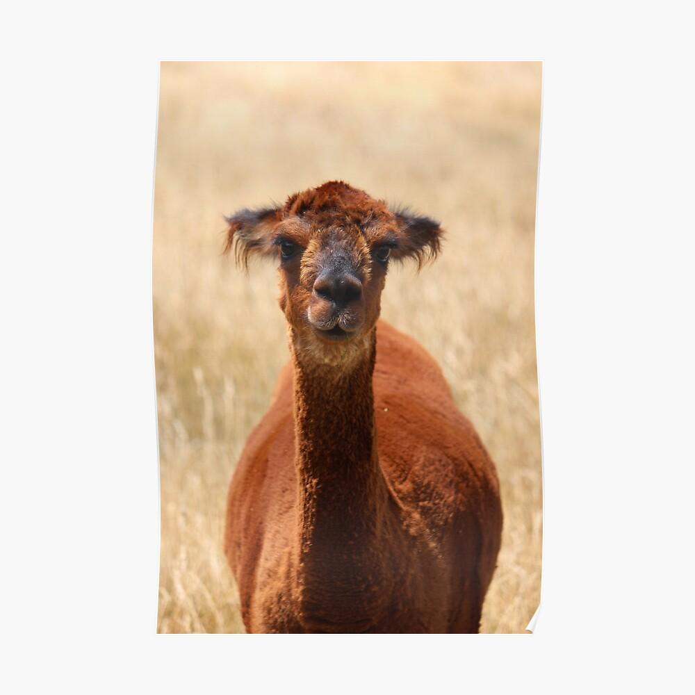 alpaca - movie star? Poster