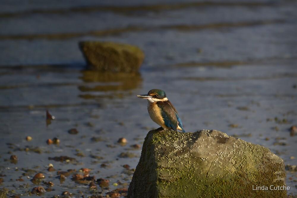 The Kingfisher by Linda Cutche