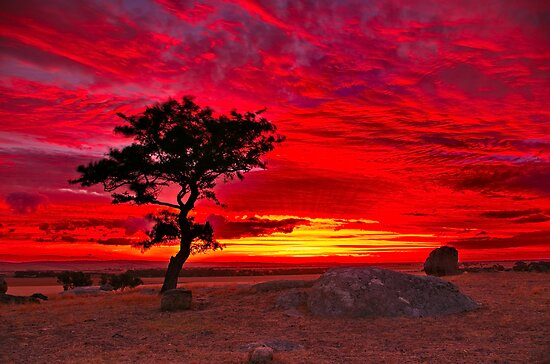 """""""The Sky Is All Ablaze"""" by Phil Thomson IPA"""