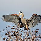 Landing In The Tree Tops by Kathy Baccari
