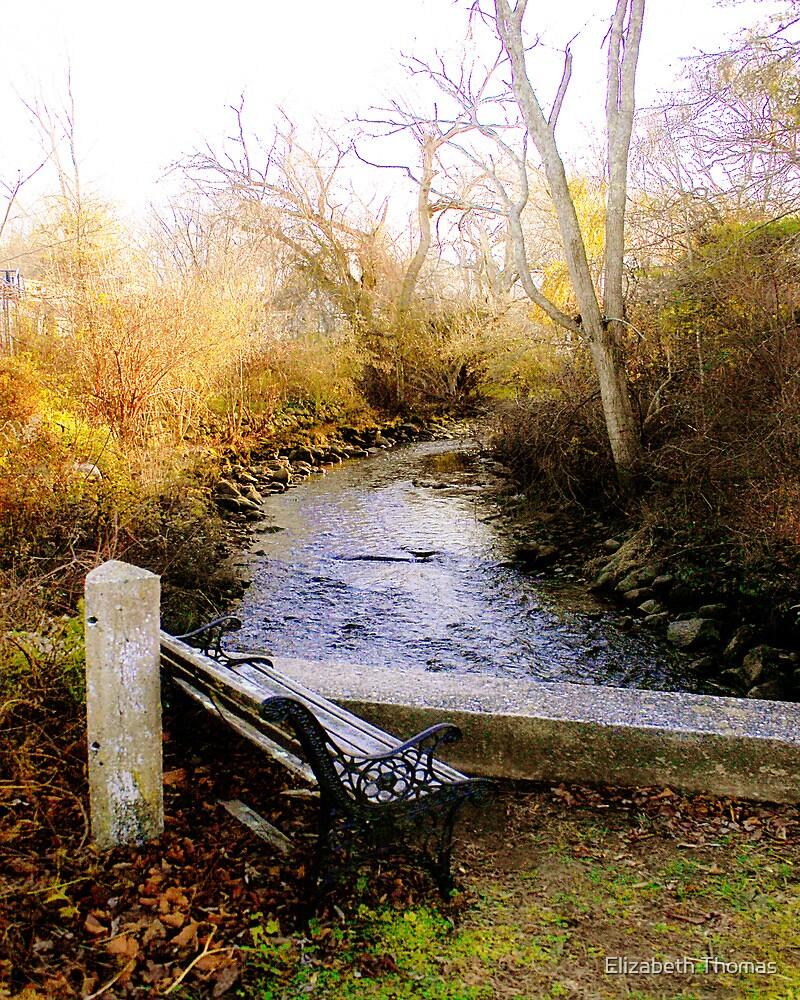 Sandwich Brook, Cape Cod, Massachusetts by Elizabeth Thomas