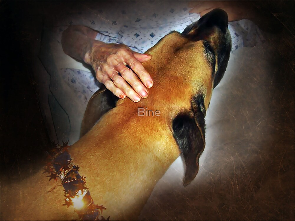 .....for all the animal assisted therapy teams out there, by Bine