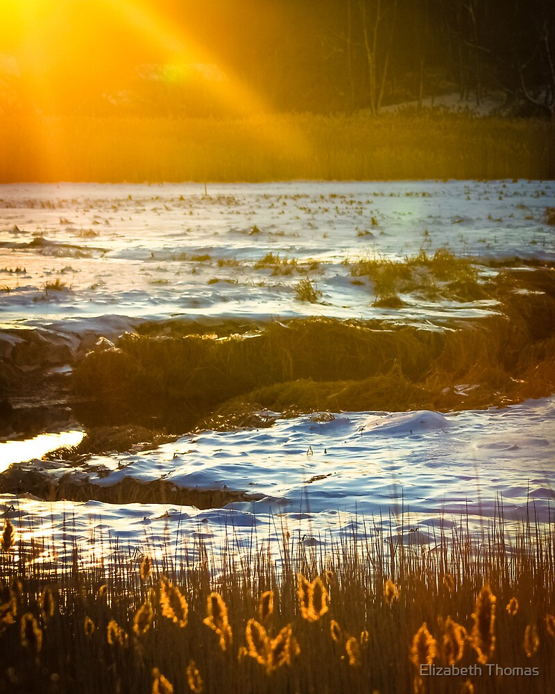 Winter Salt Marsh, Cape Cod, Massachusetts by Elizabeth Thomas