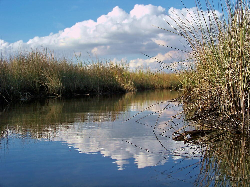 Sawgrass Water Sky and clouds 4 by William  Boyer