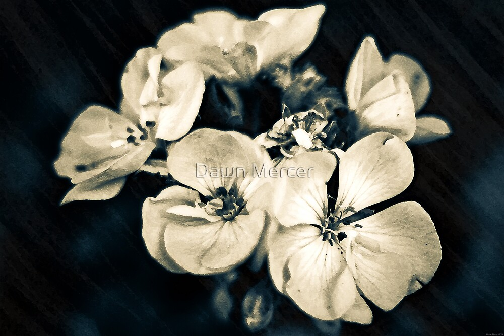 Florid White Petaled Simplicity by MissDawnM