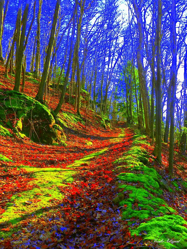 The Enchanted Trail by TrendleEllwood