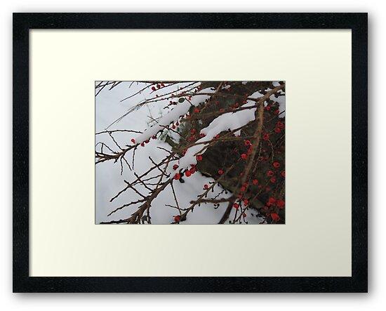 Red Berries by CreativeEm