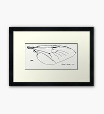 Insect Wing Framed Print