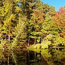 Fall Reflections by mussermd