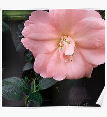 Colour Brust Flower Poster