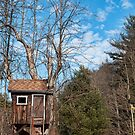 Blue skies and tree houses by Penny Fawver