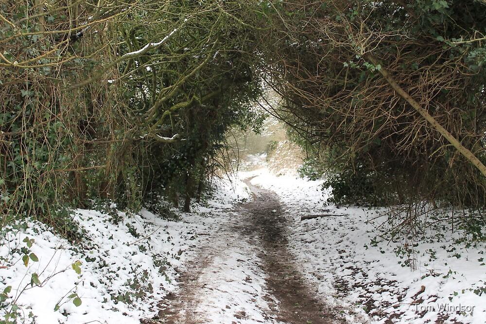 snowy pathway by Tom Windsor