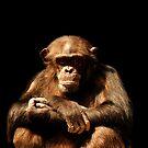 Chimp by Alinta T. Giuca