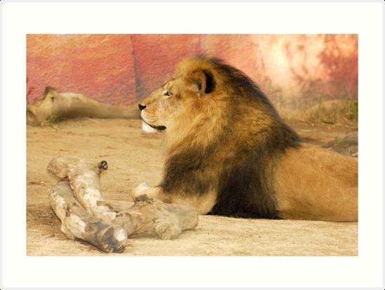 Lion by Alinta T. Giuca