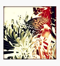 Beach Butterfly Sunset Photographic Print