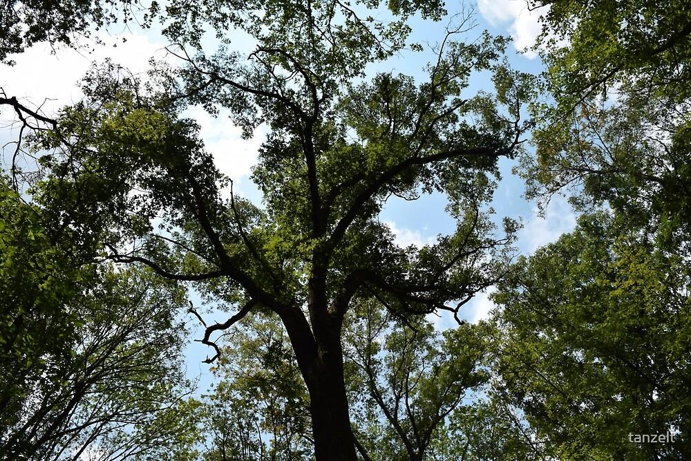 Green Tree by tanzelt