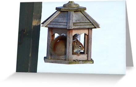 American Red Squirrel by mlaprade