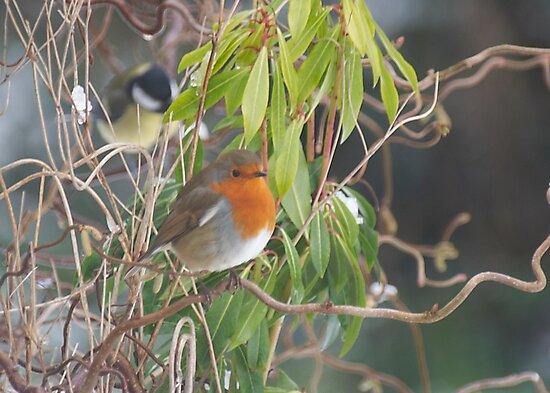Winter Robin by Gerry Allen