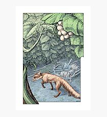 The Fox and the Grapes Photographic Print