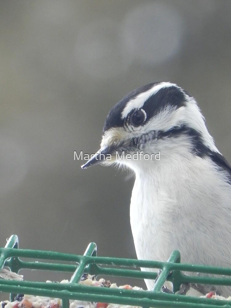 Downey Woodpecker by Martha Medford