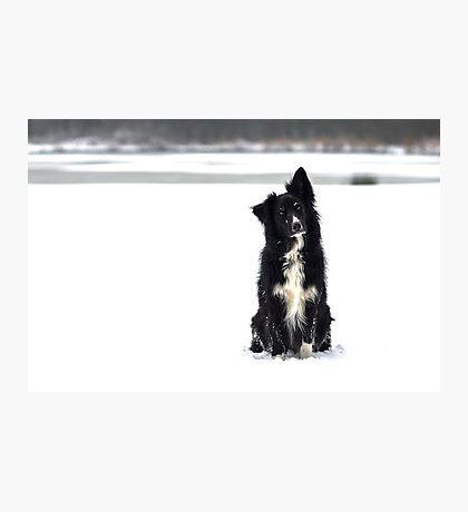 Snow Model Photographic Print
