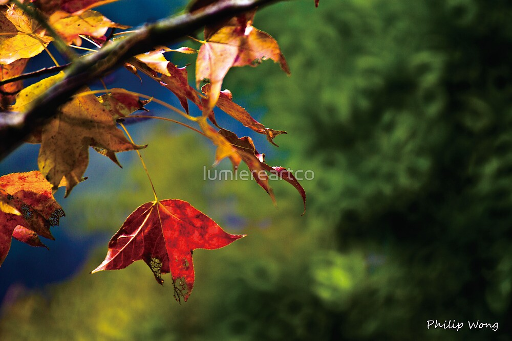 Red leaf 2022 by PHILIP H.P. WONG