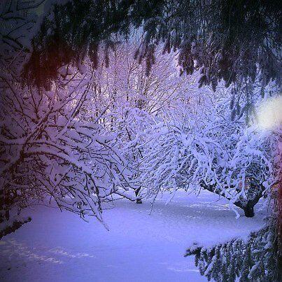 Snow Garden by Sarah Duncan