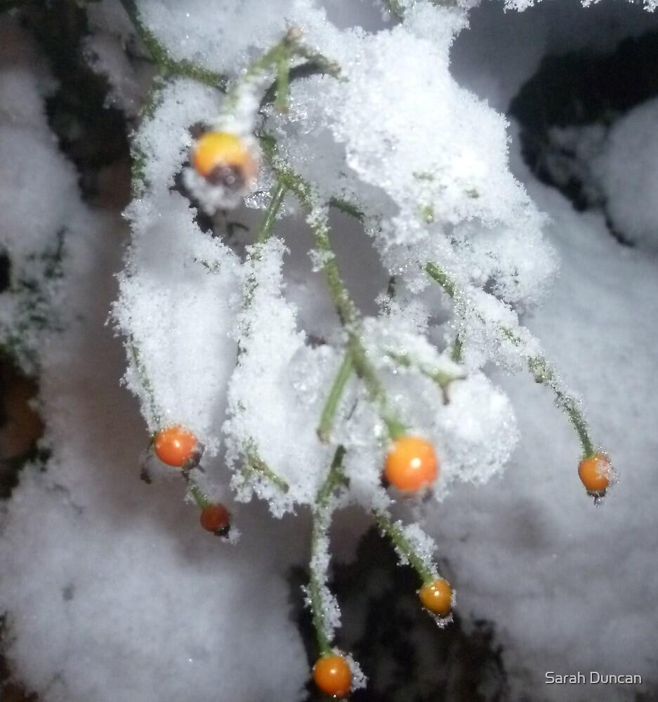 Winter Berries by Sarah Duncan