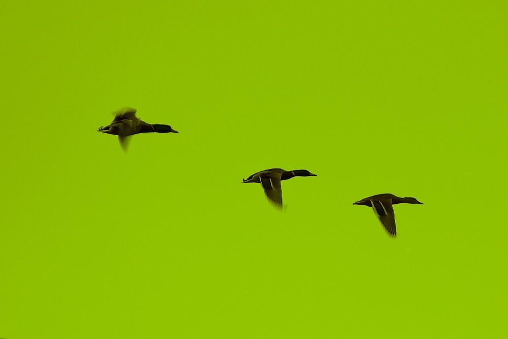 Flight by Oli Johnson