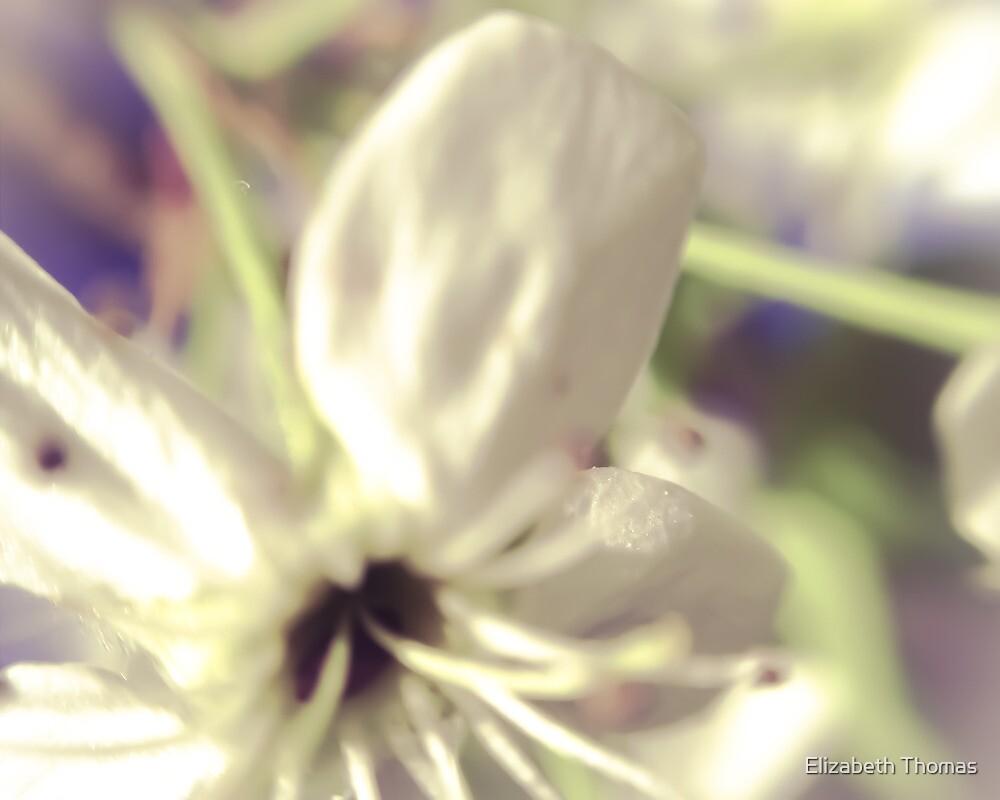 Macro Pear Blossom by Elizabeth Thomas