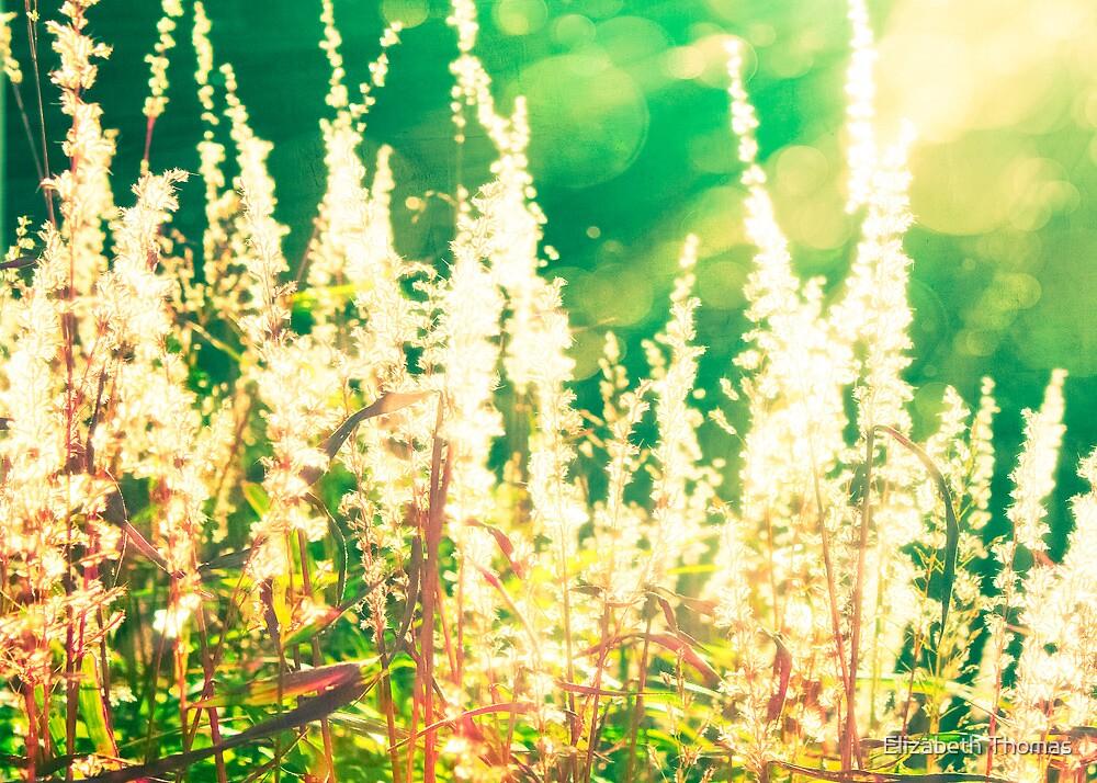 Colorful Ornamental Grass by Elizabeth Thomas