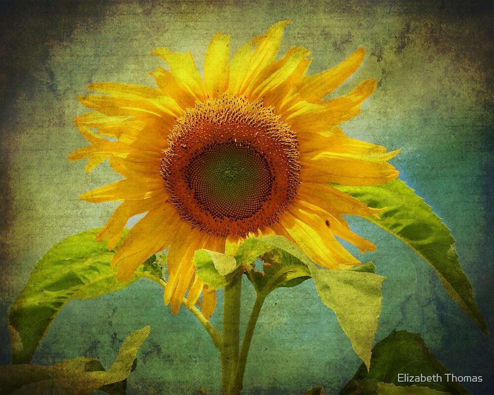 Vintage Sunflower by Elizabeth Thomas